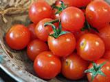 トマトとミニトマト、違うのは大きさだけ?